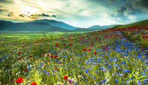 field_of_wildflowers_meadow_amazing_sky_hd-wallpaper-1812651